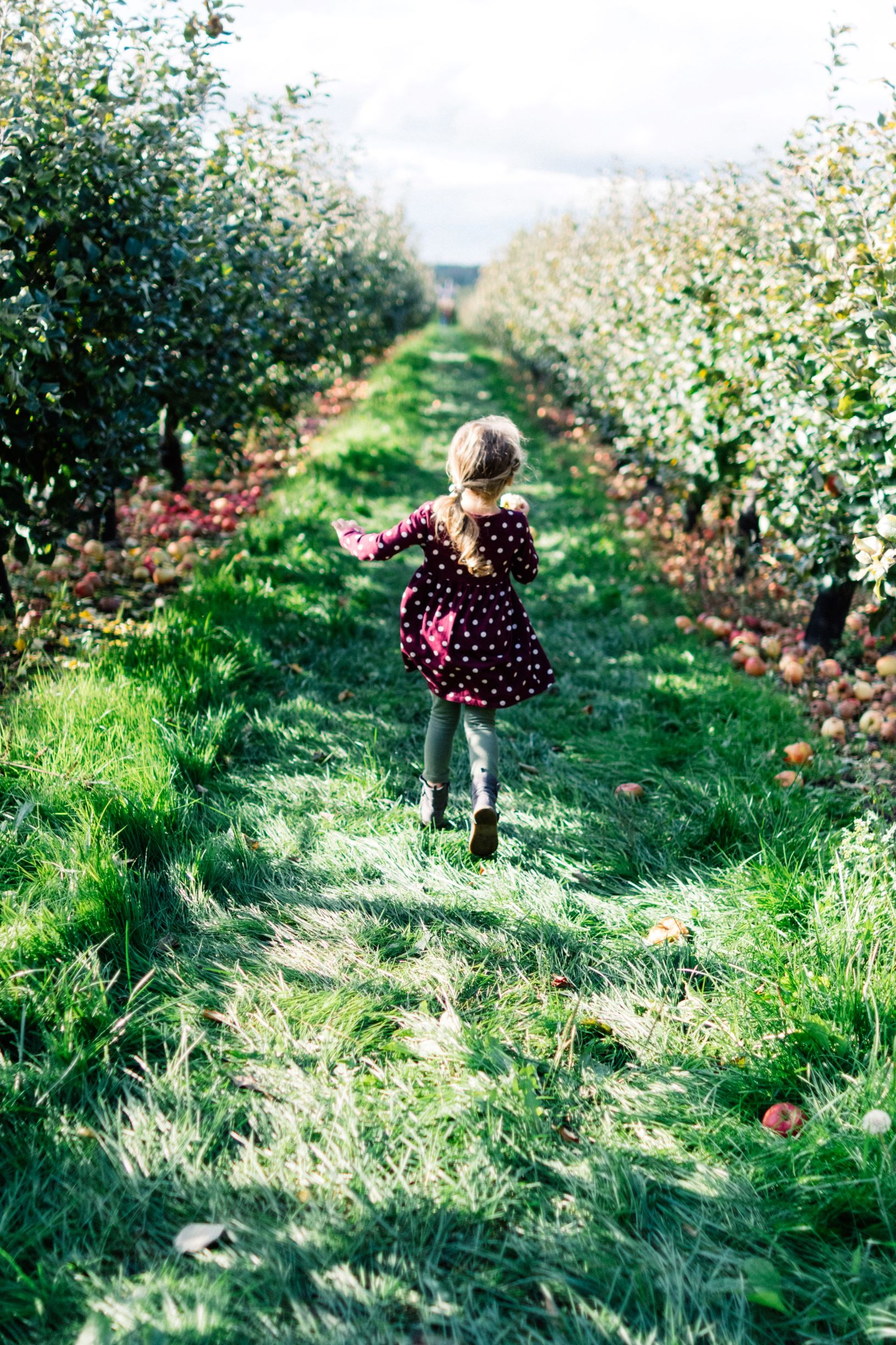 little girl at farm picking apples